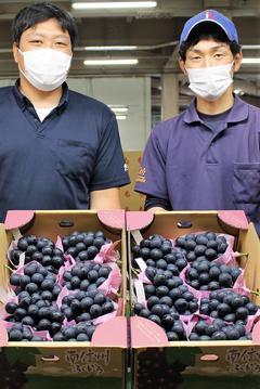 【NEWS】施設栽培「ナガノパープル」が初出荷