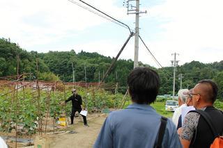 きゅうりの栽培管理について説明をする幾島技術員
