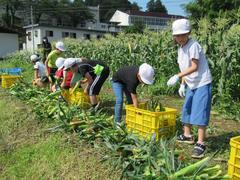 【NEWS】種まきから収穫まで 全校で取り組むトウモロコシ作り