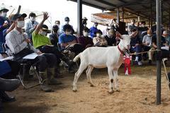 【NEWS】伝統の下伊那子山羊市場開催