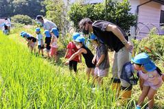 【NEWS】米作りの一環で 園児が田んぼの生き物探し