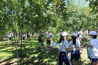 農園でりんご栽培を学ぶ児童ら