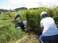 【NEWS】小学生の米づくり 地元の若手農業者らが3年目の支援
