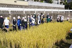 【NEWS】児童が率先して取り組んだ米づくり 丸山小5年生の稲刈り