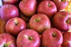 シナノスイート(りんご)の選果が始まりました!