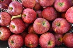 早生りんご「シナノリップ」